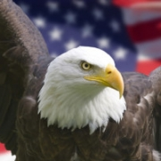 USA Flag Facts and Prayer for America