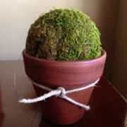Super-Simple Spring Topiary